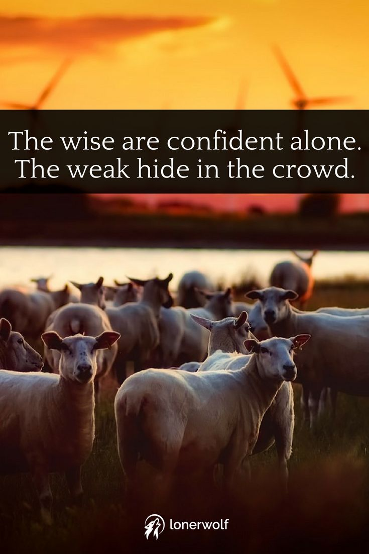 Be a wolf: be courageous, bold, relentless, and willing to keep your integrity. The wise are confident alone. Don't be a sheeple. Walk the path less travelled.