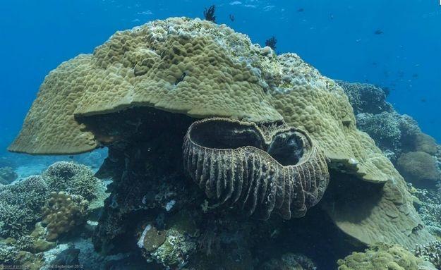 O #mar da #praia de #Dauin, nas #Filipinas, é rico em boas imagens: http://abr.io/5CYC