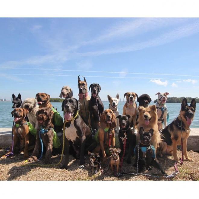 Miami, tutti insieme appassionatamente: foto di gruppo per i quattrozampe