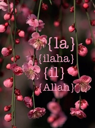La Ilaha IlAllah on Cherry Blossoms (English Transliteration)la ilaha il AllahThere is no deity besides Allah. From the Collection: Photos of FlowersOriginally found on: diamondsofknowledge