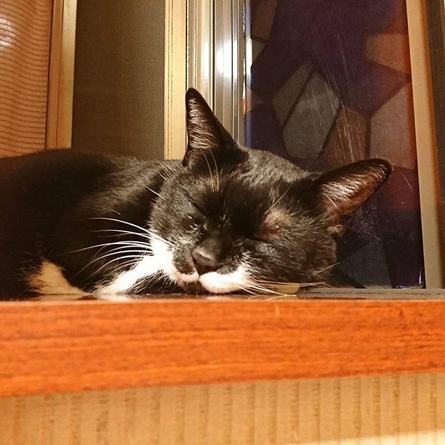 なんか最近ずっと寝てばっかな気がする、、、 気のせいかな(´・ω・`) こないだのノミ+お腹に虫の事もあり、 最近ご飯もあまり食べてないし 心配、、(´・ω・`) ・ ・ #愛猫 #猫 #ねこ #cat #白黒にゃんこ #タキシード猫 #にゃんすたぐらむ #マスク猫同盟#猫が好き