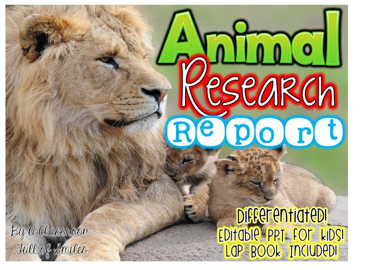 Best Animal Research  Reports Images On   Teaching