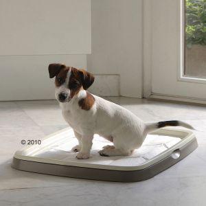 pet training - Bing images
