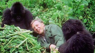 Sir David Attenborough at 90 #funny #lolpic.twitter.com/THZoIY5txF http://ibeebz.com