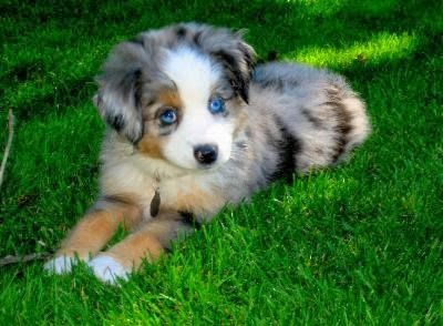 Love those blue eyes!