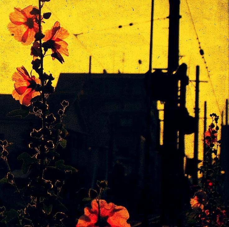 flower + setagayaline