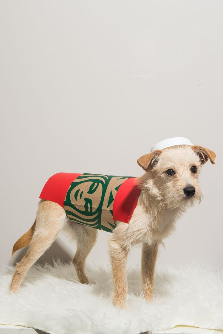 best 25 dog christmas costumes ideas on pinterest dog christmas