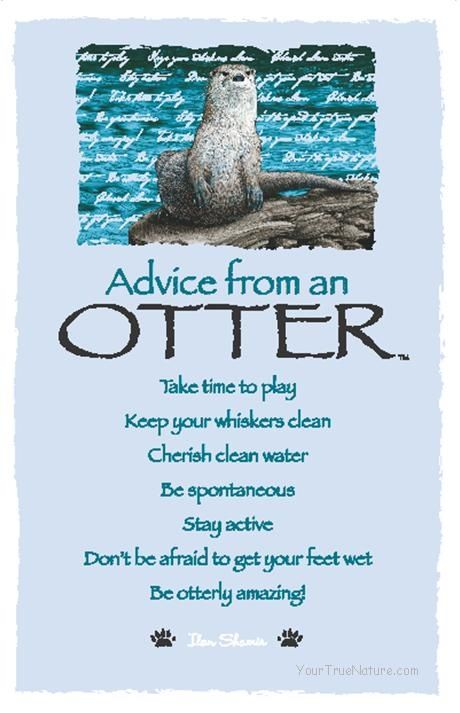 Advice From An Otter Advice From Quotes Pinterest