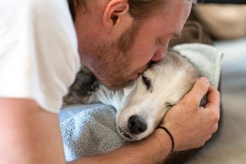 Here are 20 essential facts dog lovers must always remember. The last one made me cry so much.
