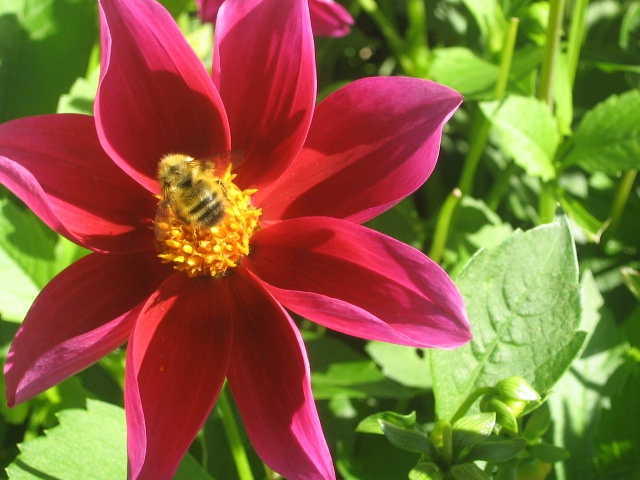 From a garden in Comox BC Photo by M.Maskowitz