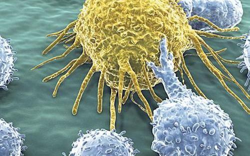 az a rák