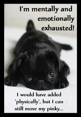 3a3f80a3b5bddbe25fd0e00a353cea0f black pug puppies puppies puppies 119 best chronic pain images on pinterest chronic pain, chronic,Chronic Illness Meme Pretty