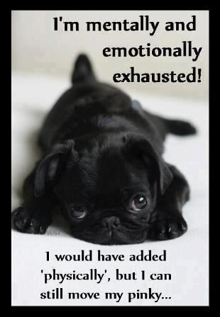 3a3f80a3b5bddbe25fd0e00a353cea0f black pug puppies puppies puppies 2798 best autoimmune diseases, invisible diseases, chronic pain,Memes About Chronic Pain