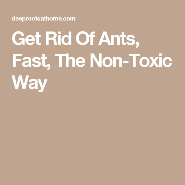 Get Rid Of Ants, Fast, The Non-Toxic Way