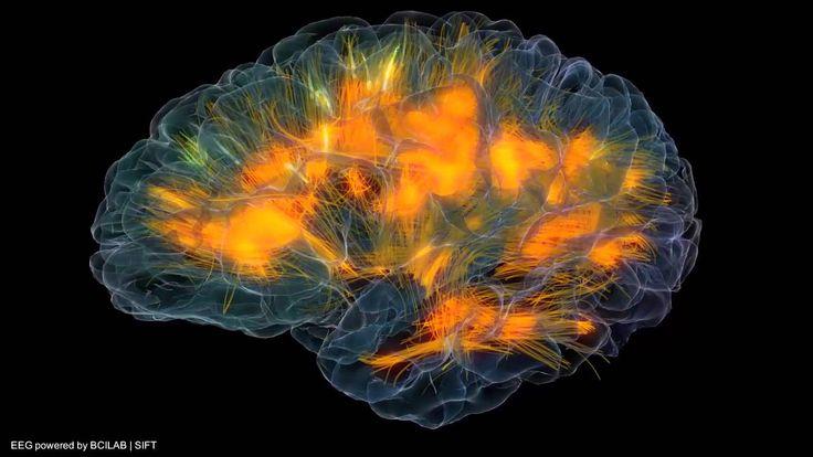 Glass brain flythrough - Gazzaleylab / SCCN / Neuroscapelab