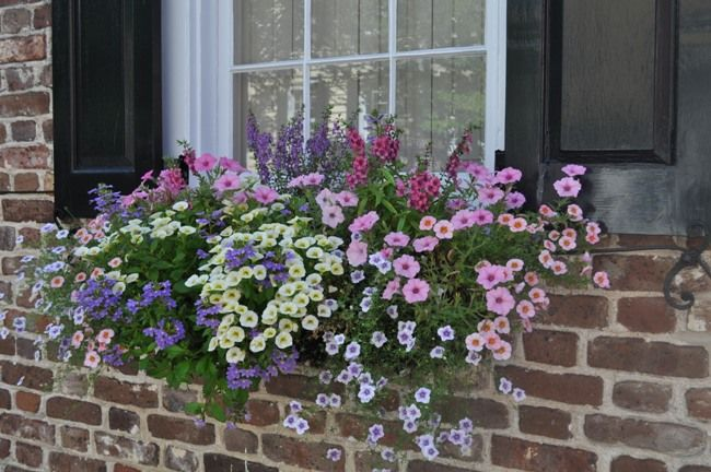 Bungalow Blue Interiors - Home - inspired: spring windowboxes