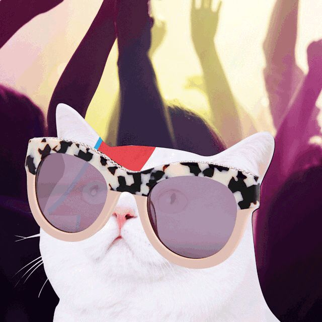 Meet Starina. She shines in most things as her name suggests. This kitty also loves the spotlight which is probably why she's hitting up the next stop-off of our festival tour, Bonnaroo, wearing our new animal print glasses, You'll find her doing Ziggy Stardust impressions somewhere near the main stage. Shop new season eyewear: http://stell.am/24CYQJ9
