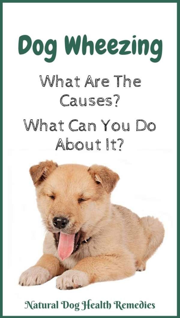 Dog Wheezing Dog Remedies Dog Illnesses Dog Health