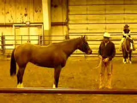 Ground Training suppleness with Buck Brannaman