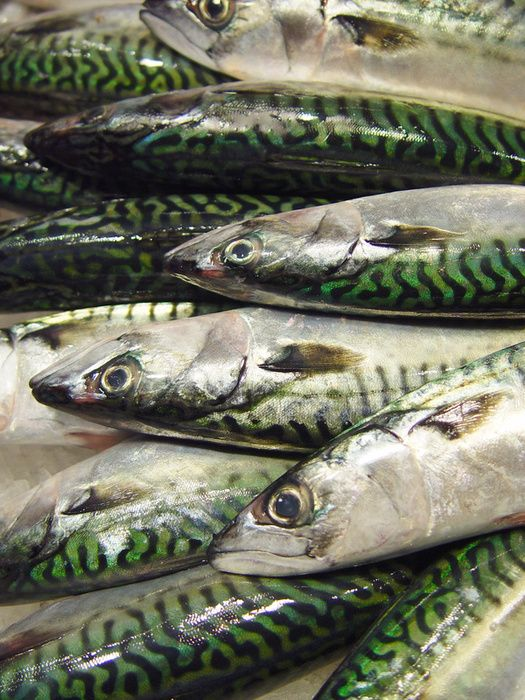 Mackerel on the bbq in the summer!
