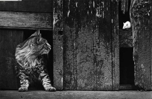Cat & Mouse by Pedro Luis Raota (I love this photographer's mastery of light. Check out his other work for examples).