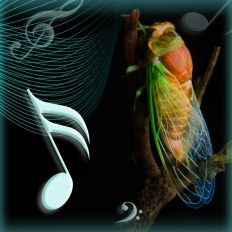 Cicada Serenades: Music, Mating, and Meaning | World Science Festival