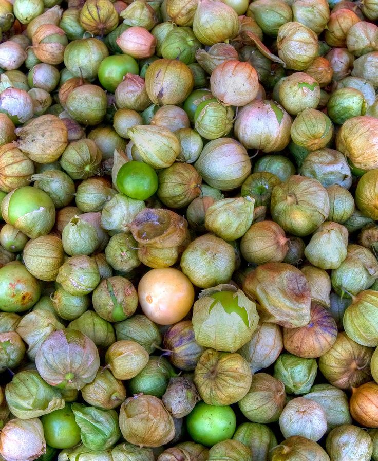 Harvesting Tomatillo Fruits: How And When To Harvest Tomatillos