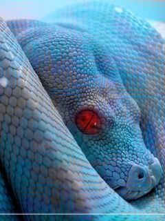 colorful snakes | Colorful Snake Wallpaper