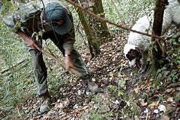 truffle hunting in Barbialla Nuova