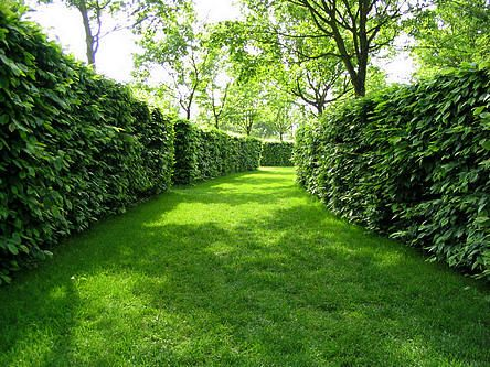 Soorten hagen voor de tuin en hun voordelen: hoogte, privacy van hagen, nestelruimte voor vogels, wind breken