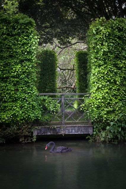 Swans and Hedges (houseandgarden.co.uk)