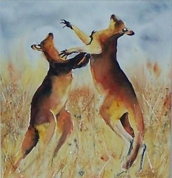 kangaroos boxing in outback.