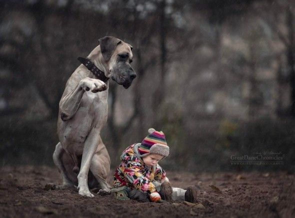 11-25-16-little-kids-and-their-big-dogs31