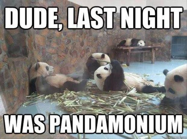Funny Animal Pictures with Captions | 027-funny-animal-pictures-with-captions-013-pandamonium.jpg