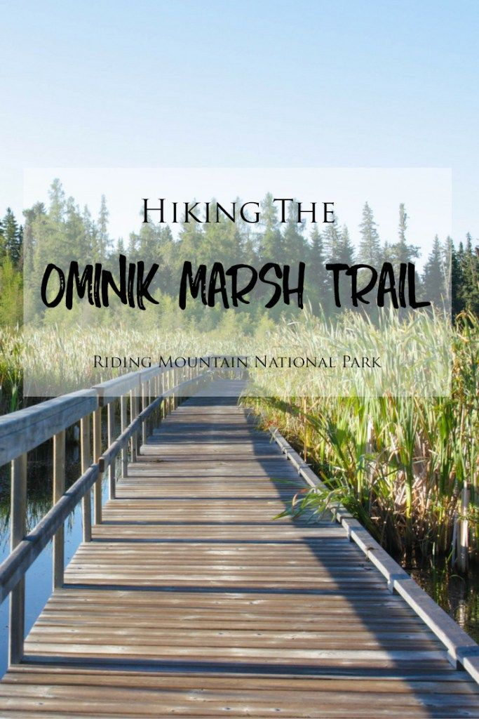 Hiking the Ominik Marsh Trail in Manitoba's Riding Mountain National Park >> Looking for a short and easy 1.9 km round trip hike in Riding Mountain National Park? Ominik Marsh is a beautiful trail consisting of wooden boardwalks that pass through a gorgeous marsh area. The trail is easily accessible and located in the Wasagaming townsite. Check out my blog post for more photos and information about this hike!