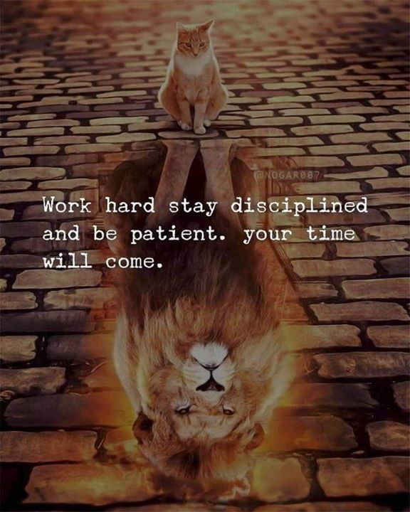 Work Hard Stay Disciplined And Be Patient Your Time Will Come Quotes Inspirational Positive Quotes About Strength In Hard Times Postive Quotes