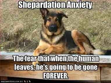 """""""Shepherdation"""" anxiety is real... here's how you can help!"""