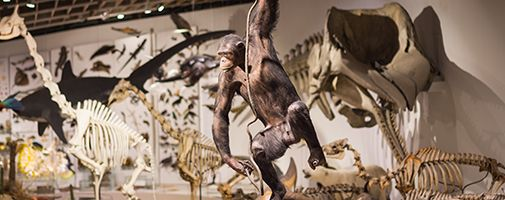 Zoological Museum – University of Copenhagen