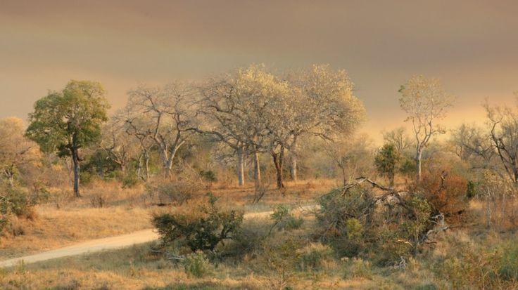 Knobthorn landscape by Jo-anne Hounsom on www.digitalgallery.co.za