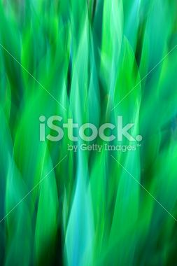 Nature background; zooming quickly into green grass