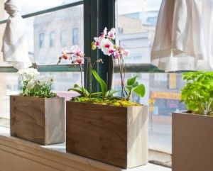 Hydroponics at Home: Planter boxes from Modern Sprout -  Orchids in hydroponics?  I didn't know you could do that.  Has anyone tried it?