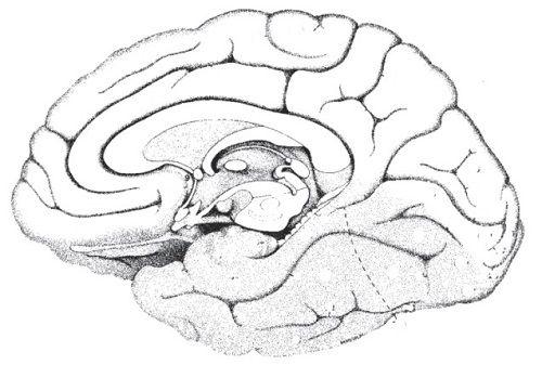 Blank Brain Diagram   humandiagram.info   Brain diagram ...