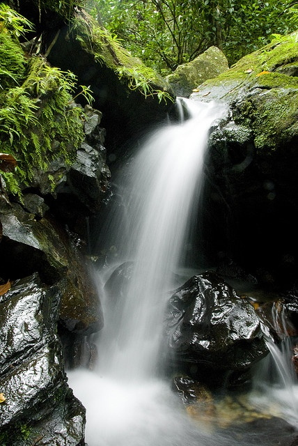 """Waterfall, El Yunque, Puerto Rico """"El Yunque National Forest, formerly known as the Caribbean National Forest, is located on the island of Puerto Rico."""