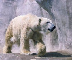 Habitat Study: Polar Lesson Plans
