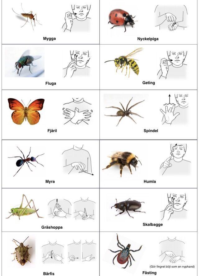 Insekter-arkiv - Tecken som stöd - Toppbloggare på Womsa
