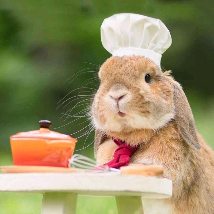 Кролик ест картинка