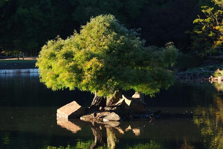 Japanese Garden - Toowoomba.   QLD  Taken by Parkerartzzi.