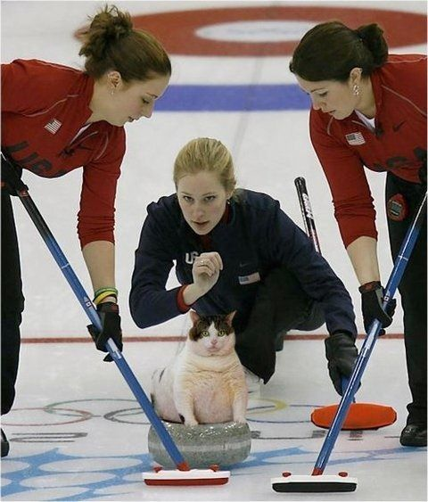 Cat Curling is still my favorite Olympic Sport