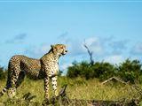 Sabi Sabi Private Game Reserve Mpumalanga...WORTH IT!