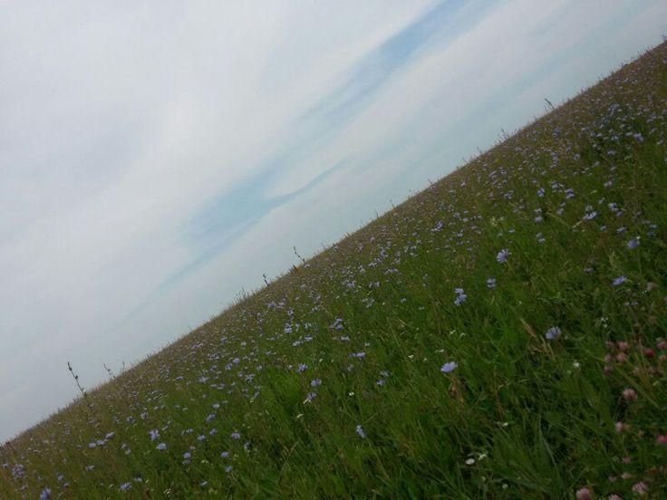 Nature, поле, красиво, цветы....